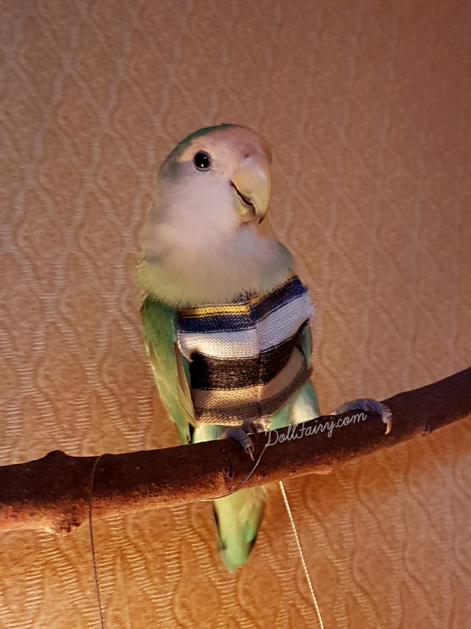 Jersey knit sweater for a lovebird.