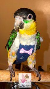 Black-headed Caique Parrot Diaper Flight Suit