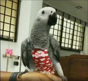 NurRio African Grey Parrot Diaper Flight Suit