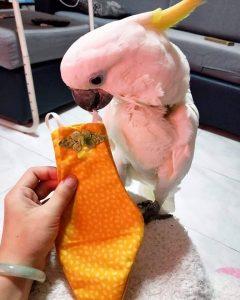Cockatoo Bird Diaper Flight Suit