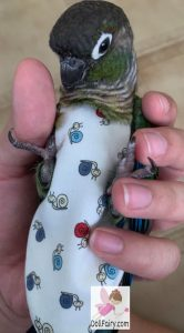 Green Cheek Conure Snail Print Bird Diaper Flight Suit