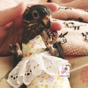 Pixie Dusky Pionus Parrot Floral Skirt Bird Diaper Flight Suit