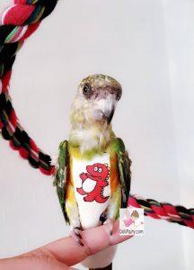 Tarzan Senegal Parrot Bird Diaper Flight Suit