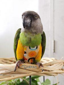 Bird Diaper Flight Suit