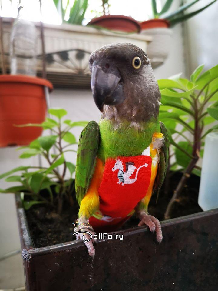 Dragon Bird Diaper Flight Suit