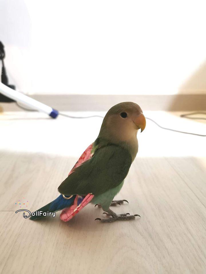 Lovebird Bird Diaper Flight Suit