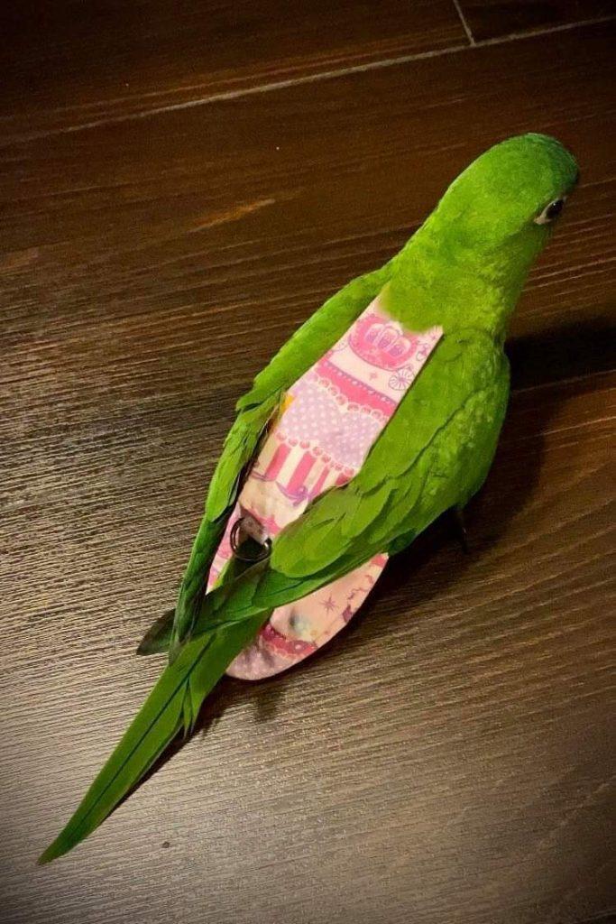 Hahns Macaw Bird Diaper Flight Suit