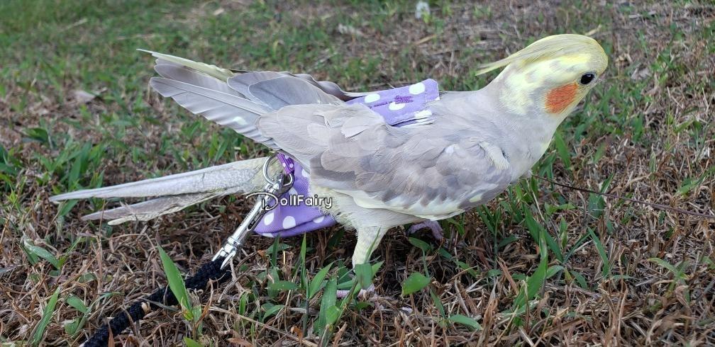 MissMo Cockatiel Bird Diaper Flight Suit