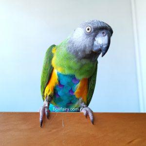 Reusable Bird Diaper