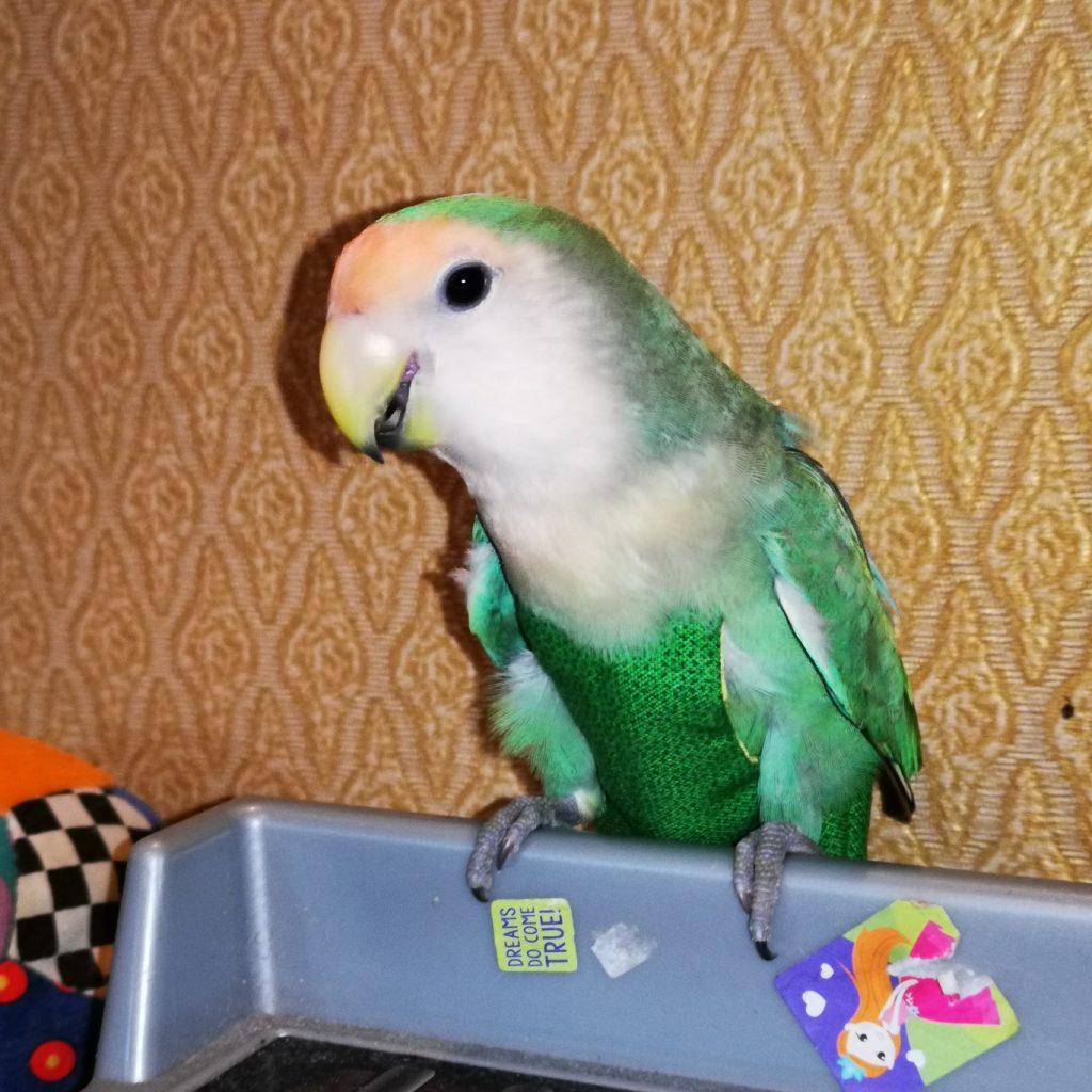 Lovebird Diaper Suit